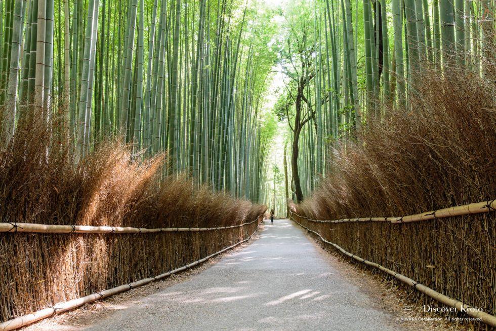 03-20140624_Arashiyama_Bamboo-32.jpg
