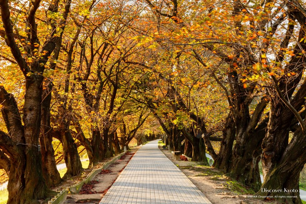 Sewari-tei River Bank in Autumn