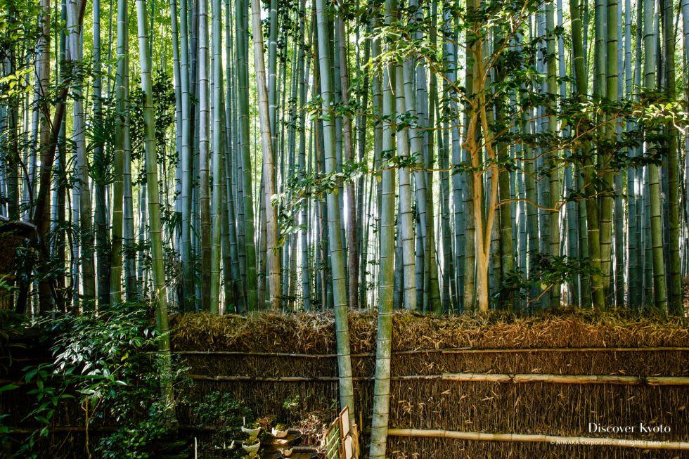 Sagano Bamboo Forest (Chikurin)