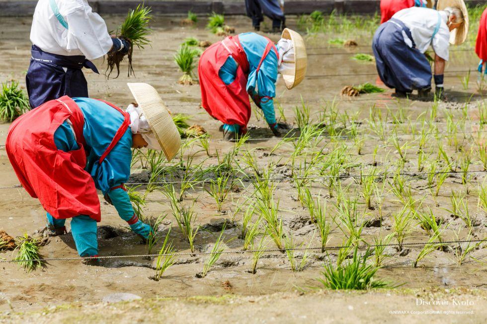 The planters hard at work at Taue-sai at Fushimi Inari Taisha.