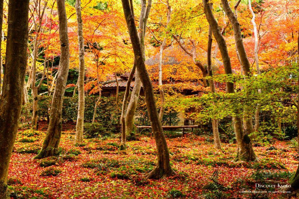 Giō-ji