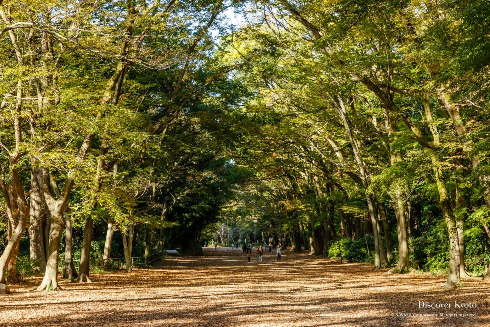 Forest in Shimogamo Shrine