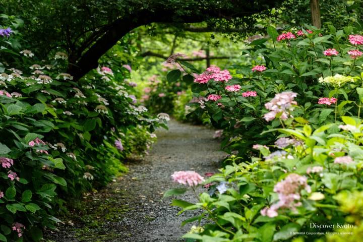 Umenomiya Taisha Hydrangea Path Tree