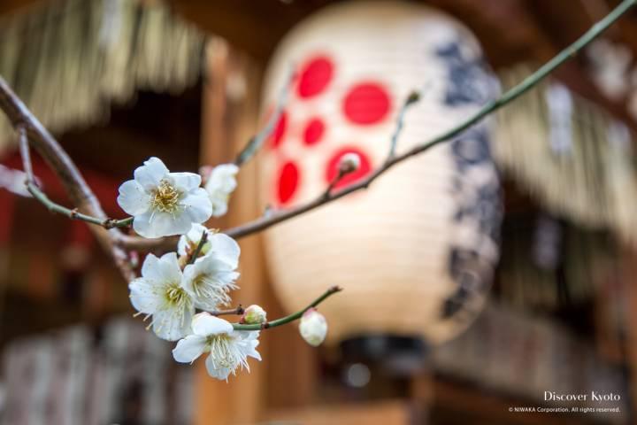 Nishiki Tenmangū Plum Blossom Symbol