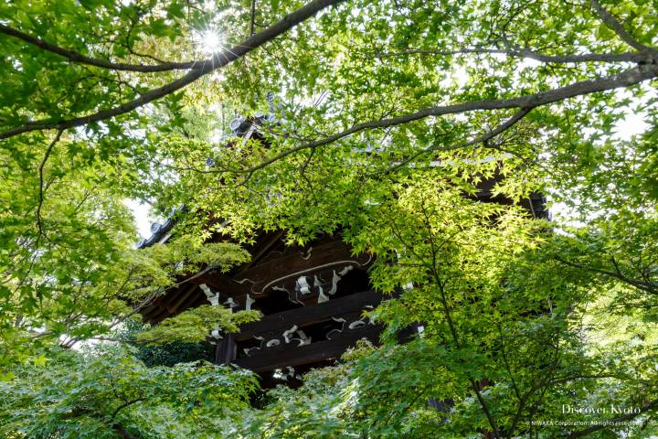 Rozan-ji Bell Maple Leaves