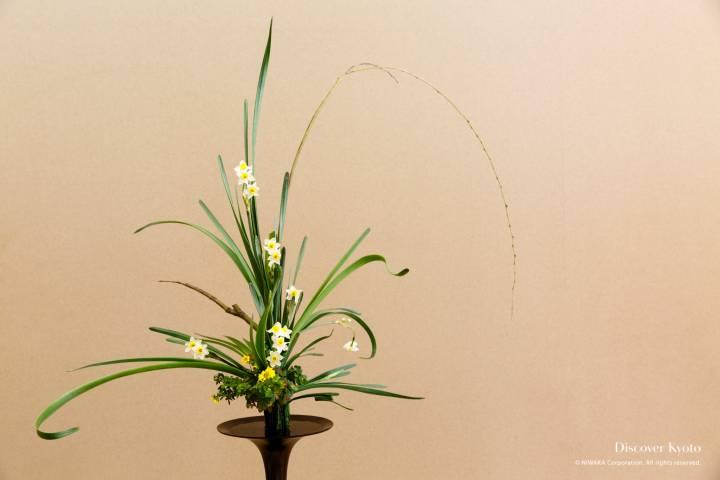 Ikenobo Ikebana Kyutanabata Narcissus