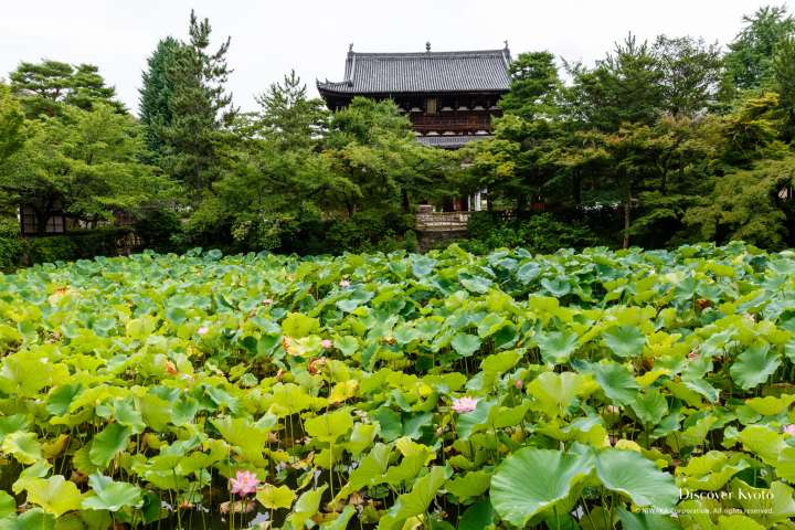Main gate and pond at Manpuku-ji temple.