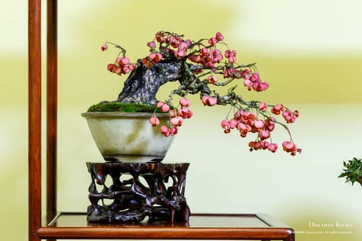 Gafuten Bonsai Exhibition Mayumi