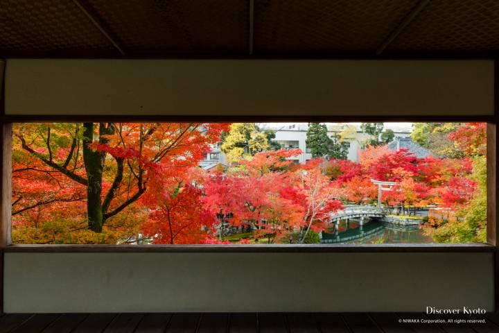 Eikan-dō Autumn 2016 Garden