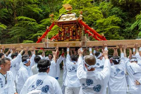 The omikoshi is lifted high during Kifune Matsuri at Kifune Shrine.