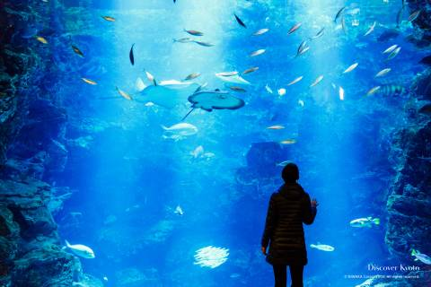 Kyoto Aquarium Large Tank Center