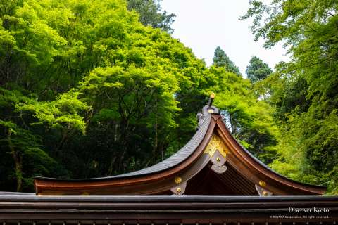 Summer forest over the shrine roof during the Mizu Matsuri at Kifune shrine.
