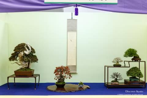Gafuten Bonsai Exhibition Variety