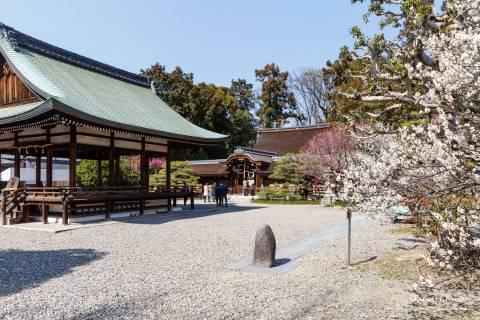 Umenomiya Taisha Plum Courtyard