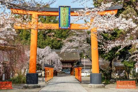 Cherry blossoms at Ōka-sai at Hirano Shrine.
