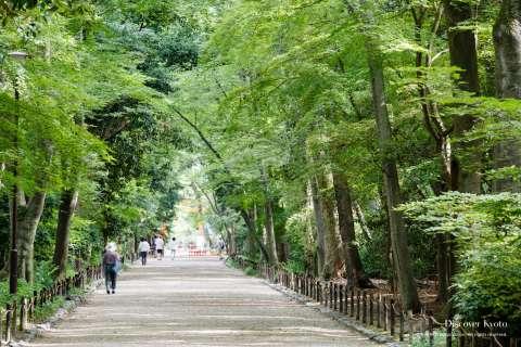 Path through Tadasu no Mori woods at Shimogamo Shrine.