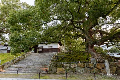 Shōren-in Camphor Trees Entrance
