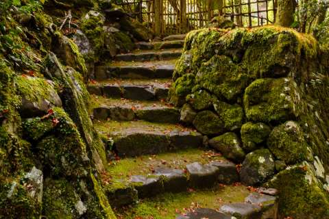 Forest staircase at Kōsan-ji Temple.