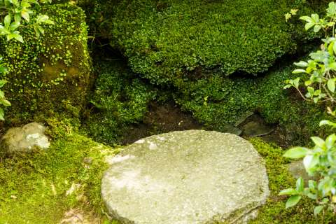 Moss covered water basin at Ōkōchi Sansō.