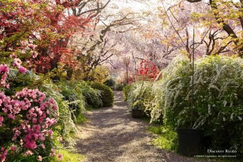 Haradani-en Sakura Garden