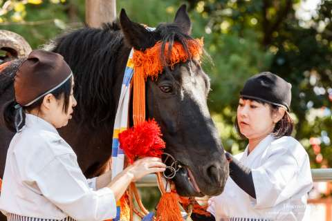 A horse gets ready to compete at the Kasagake Shinji at Kamigamo Shrine.