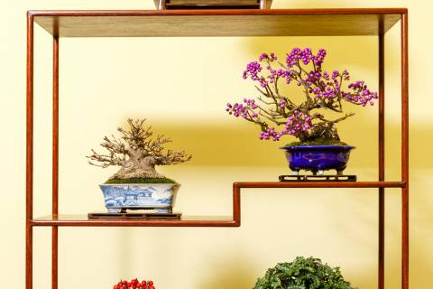 Gafuten Bonsai Exhibition Shelf Pine