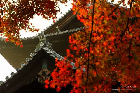Autumn leaves and building at Nanzen-ji temple.