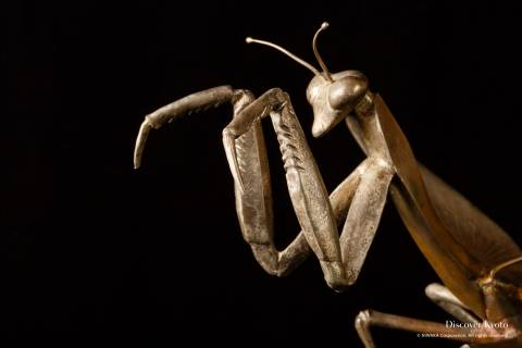 Morimoto Decorative Metalwork Praying Mantis Close