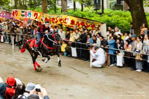 A horse gallops during the Trick Riding Ritual at Fujinomori Shrine.