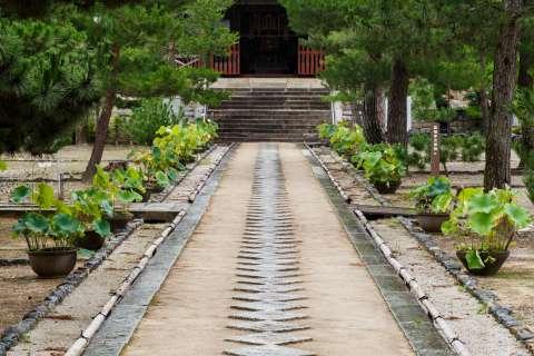 Pine trees and path at Manpuku-ji temple.