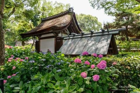Hydrangea garden and shrine sanctuary during the Ajisai festival at Fujinomori shrine.