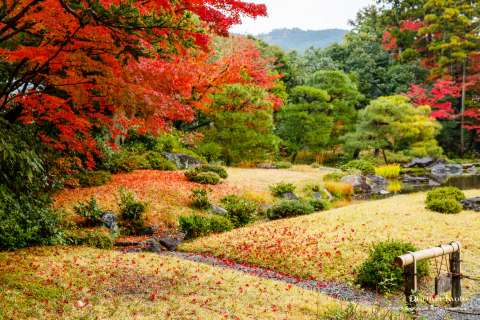 Autumn garden at Murin-an temple.