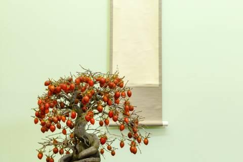 Gafuten Bonsai Exhibition Theme Art