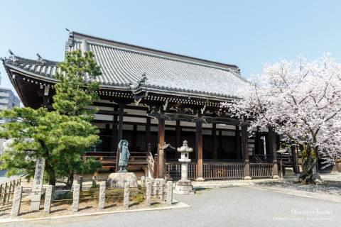Honpō-ji Pine Sakura Main Hall