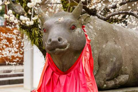 Ox statue with plum blossoms at Kitano Tenmangū.