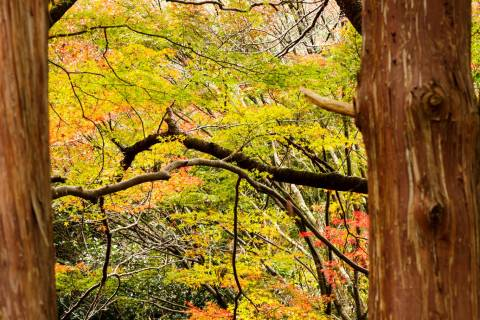 Bishamon-dō Temple Colors Autumn
