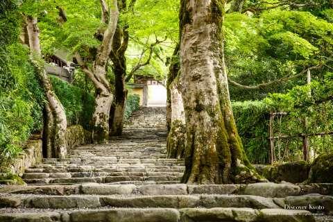 Maples at Jakkō-in.
