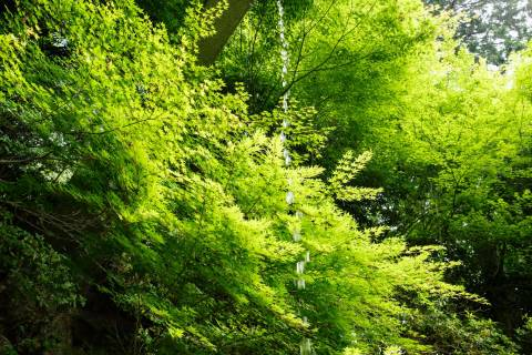 Yoshimine-dera Temple Mountain Spring