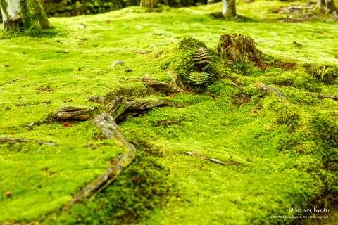 Moss garden at Hōnen-in.