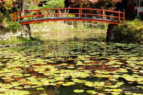 Ōharano Shrine Bridge Reflection