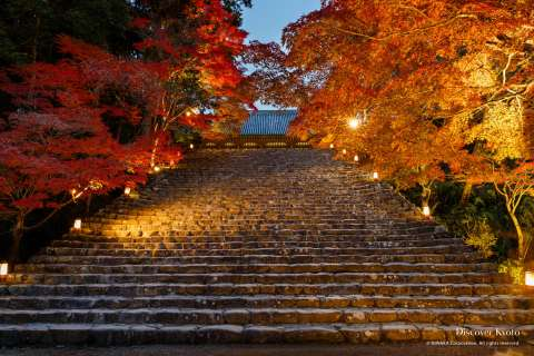 Stone steps leading to the Kondō Hall at Jingo-ji.