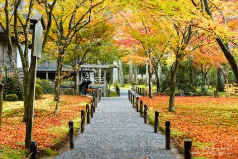 Sanzen-in Autumn View Maples