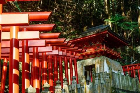A line of torii gates at Hiwatari Matsuri at Tanukidanisan Fudō-in.
