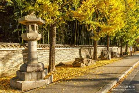 Autumn path along Daitoku-ji near Imamiya Shrine.